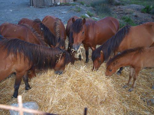 Σκυριανά άλογα (http://users.forthnet.gr/ath/xtsak/horse.html, http://en.wikipedia.org/wiki/Skyros_Pony)